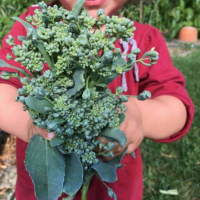 kids and veggies podcast