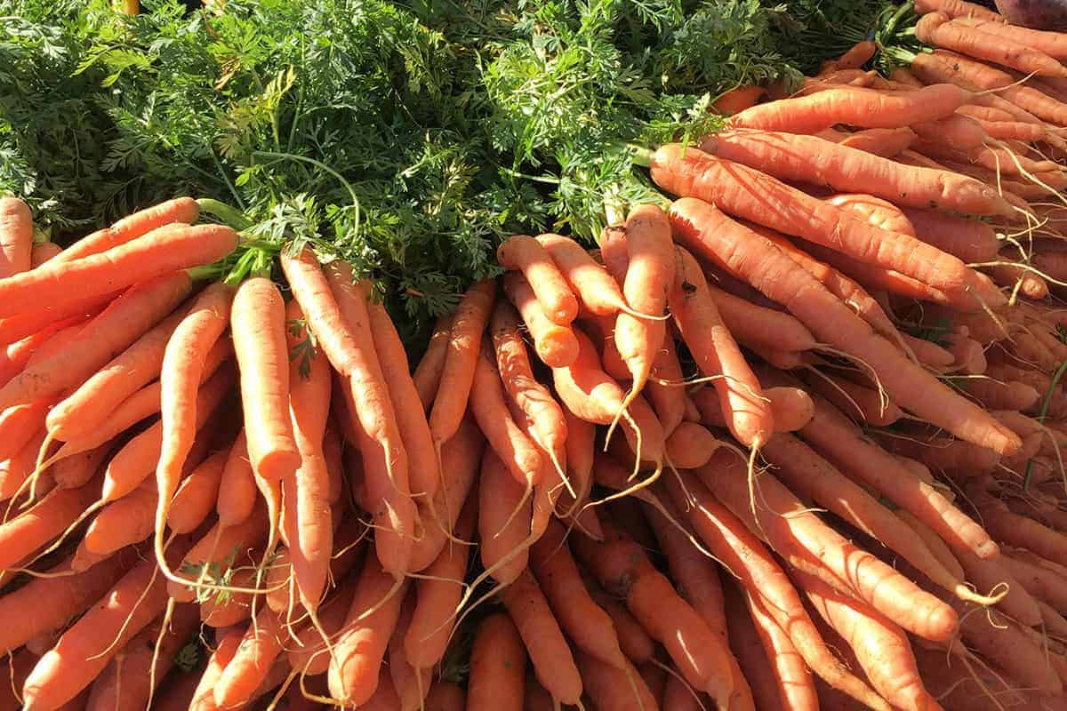 fresh carrots in pile at farmer's market