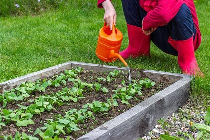 child-watering-seedlings
