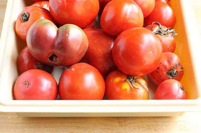 heirloom tomatoes in container