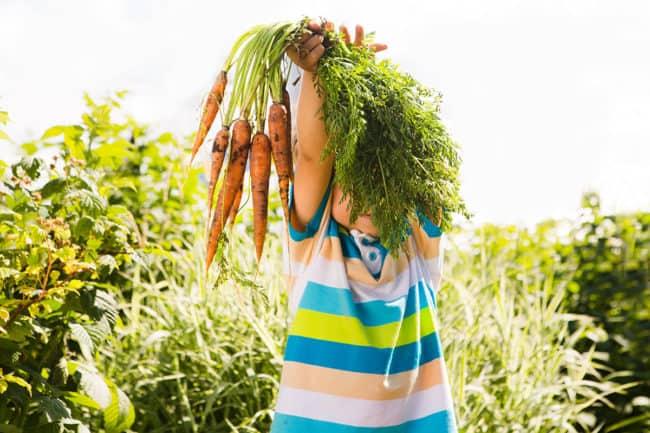 toddler-holding-fresh-carrots