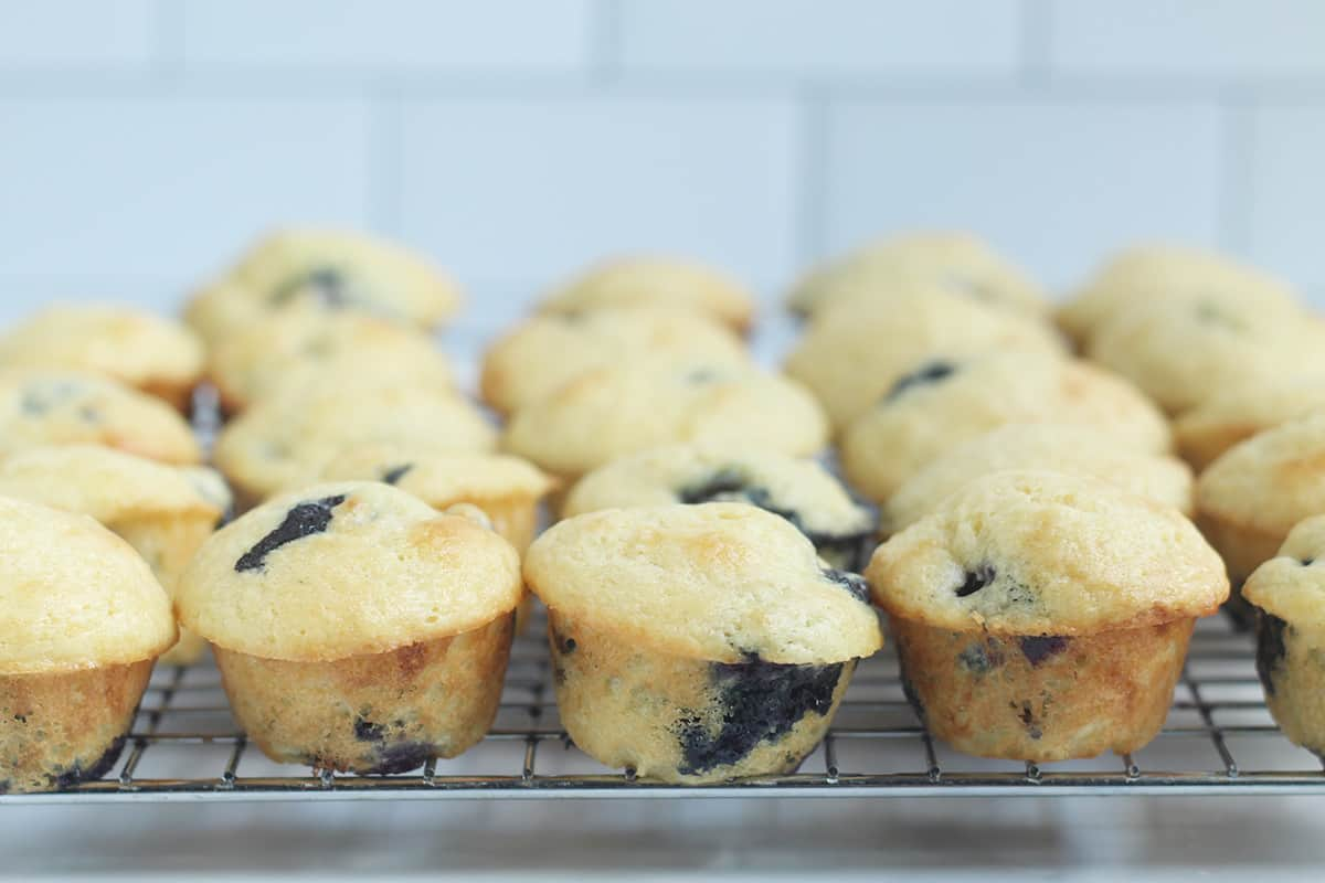 mini blueberry muffins on wire rack