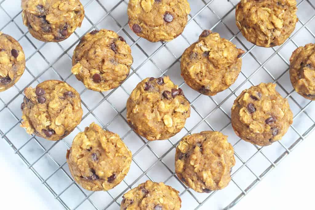 pumpkin-chocolate-chip-mini-muffins